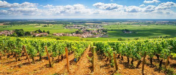Frankreich Wein Burgund