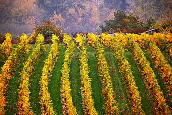 Weinanbau in Österreich