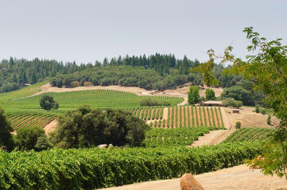 Weingebiet USA