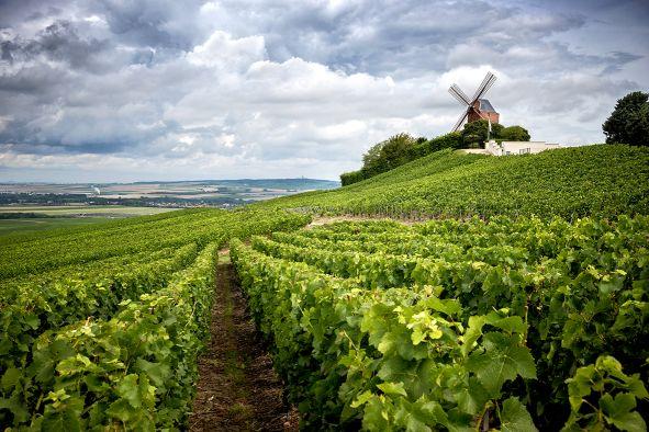 Wein Frankreich Champagne Champagner