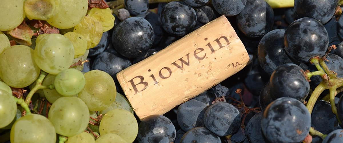 biowein-trauben