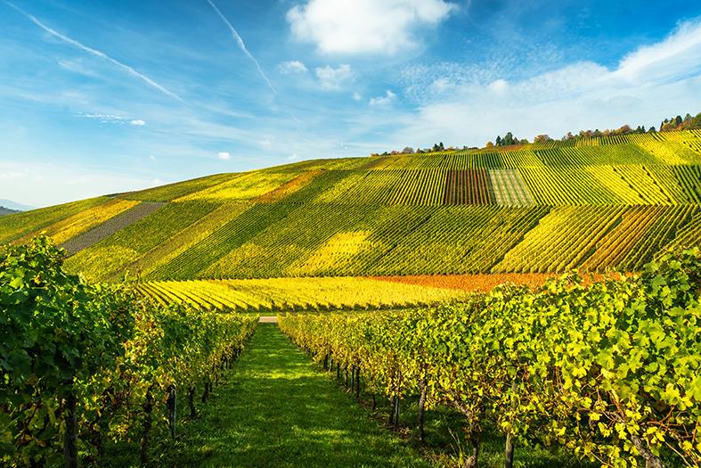 Weinbaugebiete Deutschland