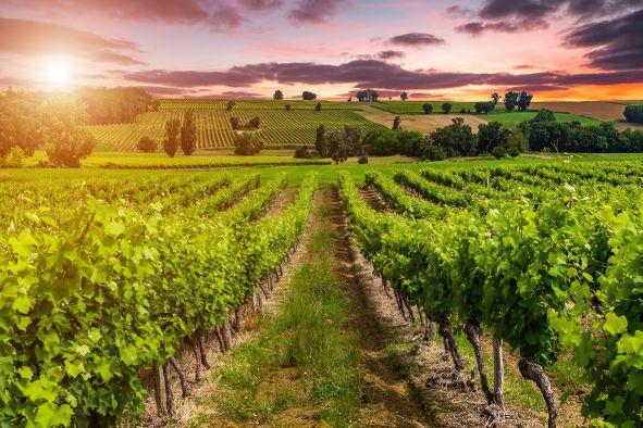 AOC Frankreich Wein