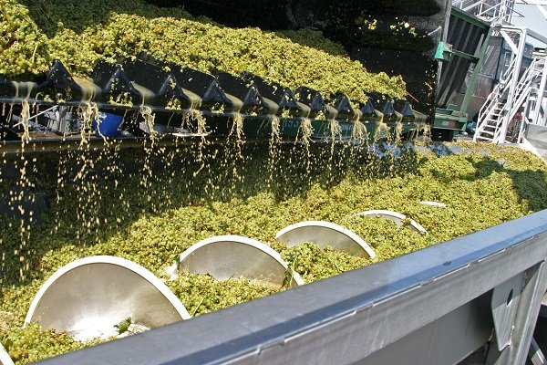 Sutter Home Weinproduktion