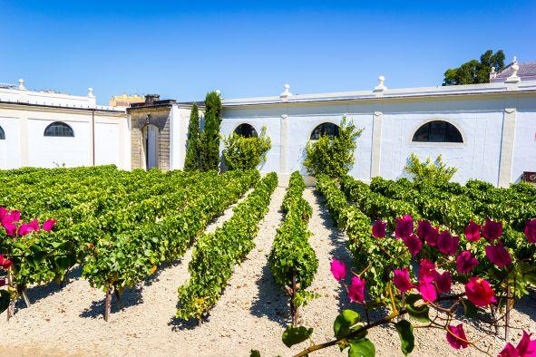 Wein Spanien Jerez