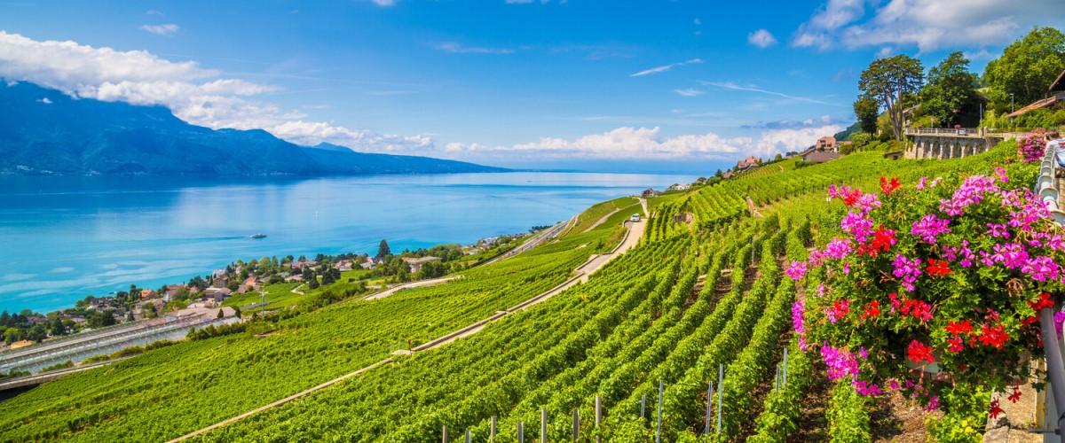 Schweiz Weine