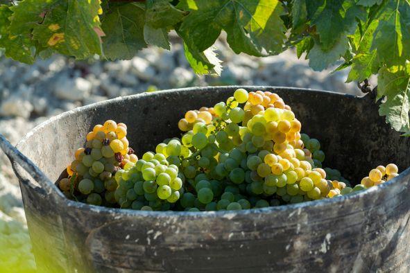 Wein Spanien Trauben