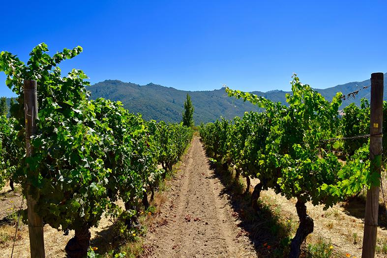 Chile Wein Gebiete