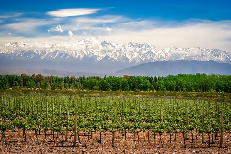 Argentinien Weinregion Mendoza