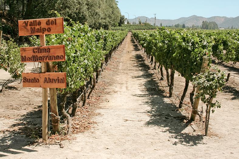 Chile Wein Region Valle de Maipo