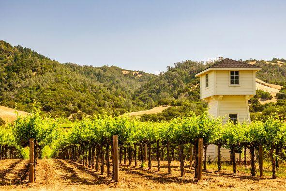 Wein USA Sonoma