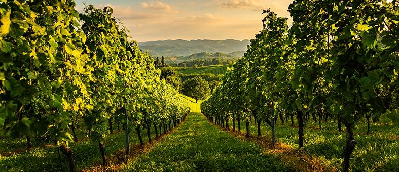 Weinbauregionen Österreichs