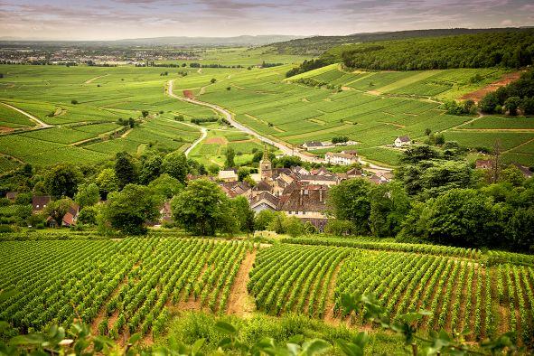 Wein Frankreich Burgund