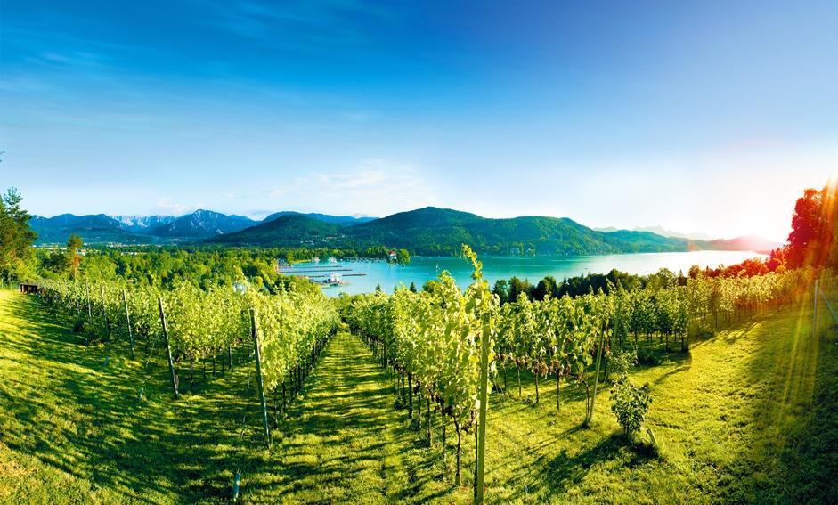 Bildrechte: Marketinggruppe Wein aus Kärnten