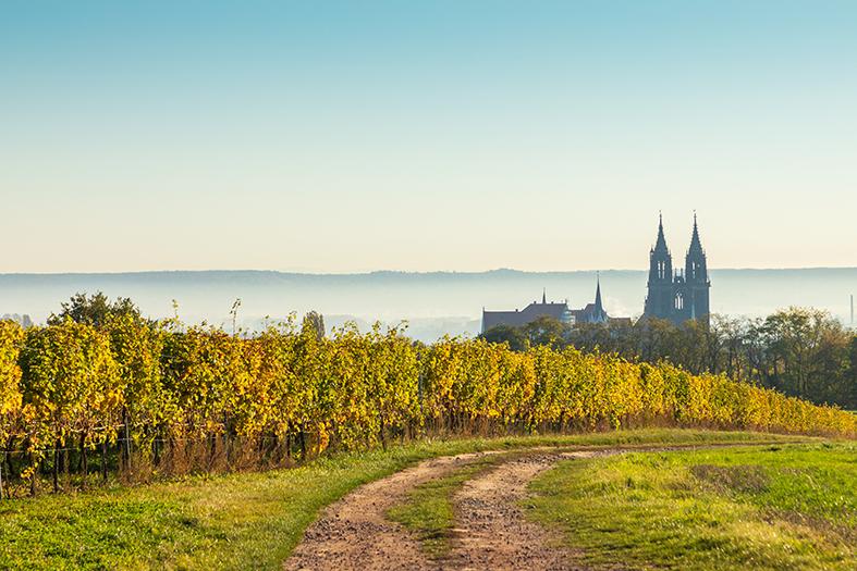 Wein aus Deutschland