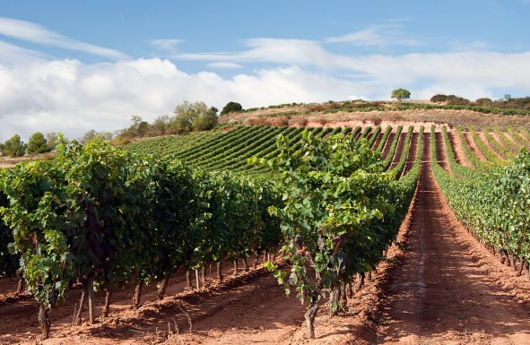 Wein Spanien La Rioja