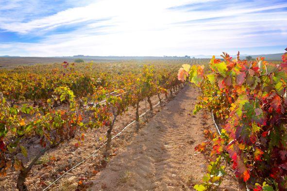 Wein Spanien