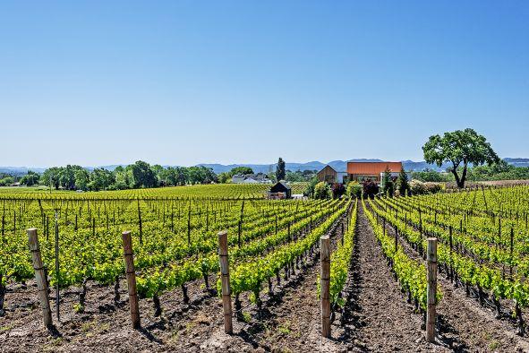Wein USA Central Coast