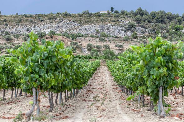 Wein Spanien Katalonien