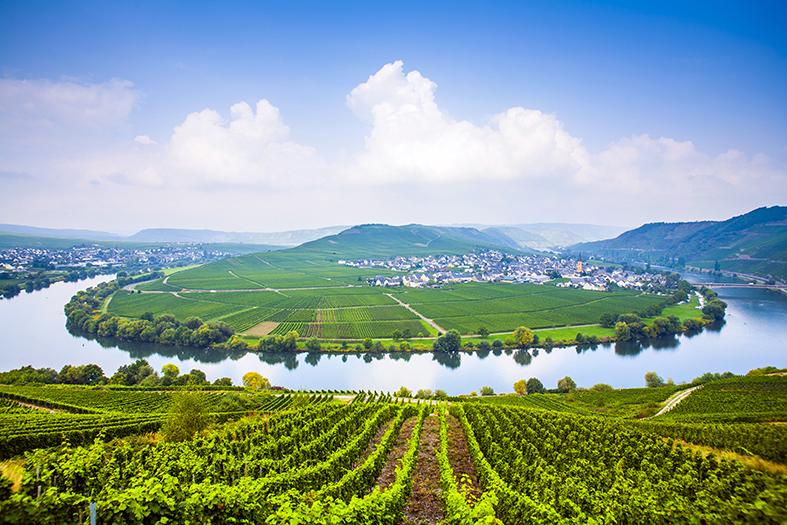 Weingebiet Deutschland