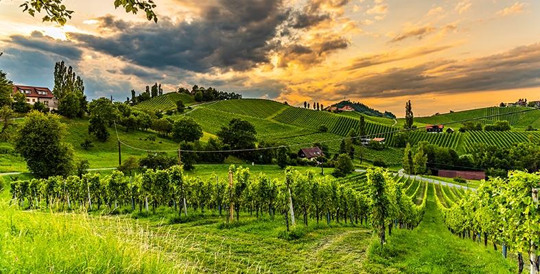 Wein Steirerland Österreich