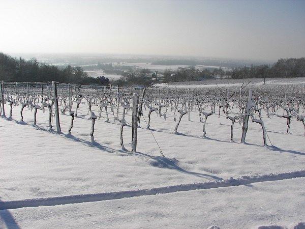Vignobles Gonfrier Weinberge Winter