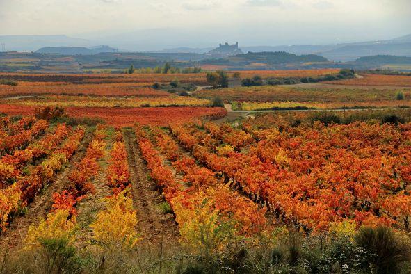 Wein Spanien Rioja