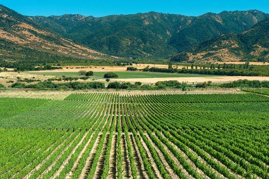 Wein Chile Anbaugebiet
