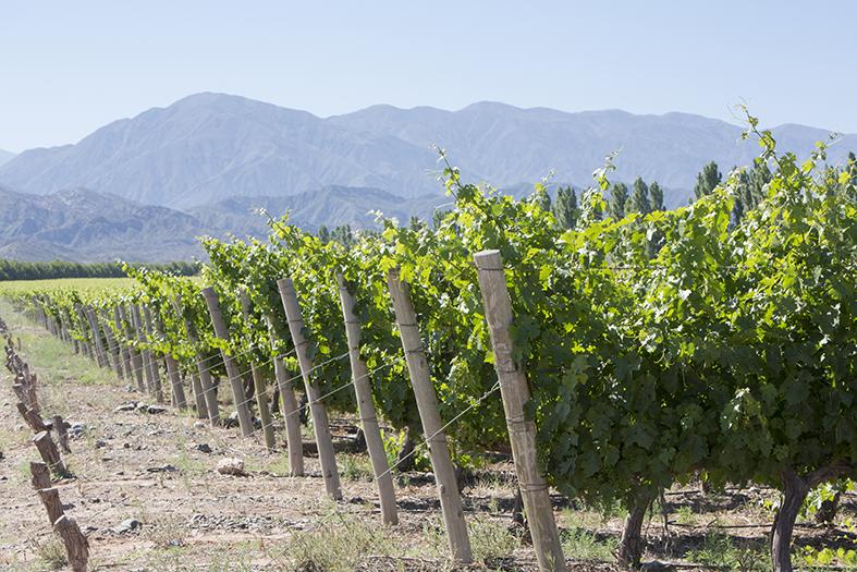 Argentinien Weinregion San Juan